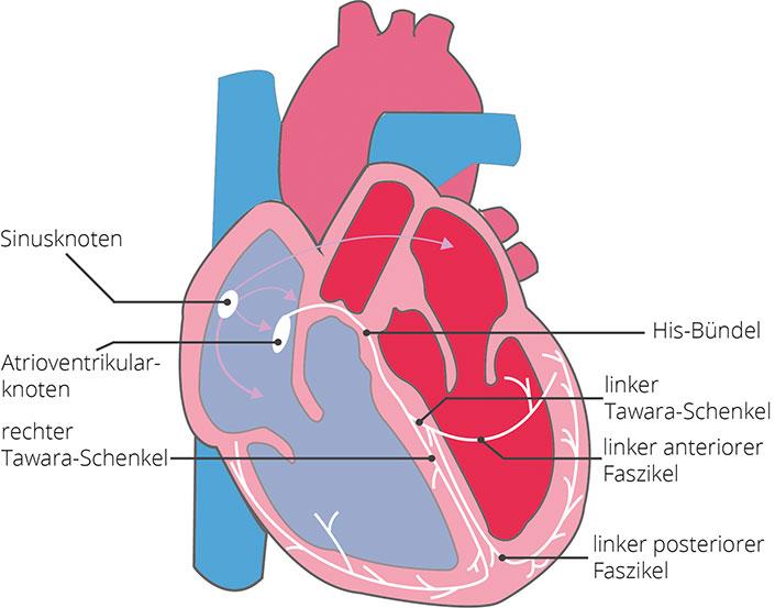Elektrokardiogramm (EKG) | CardioSecur