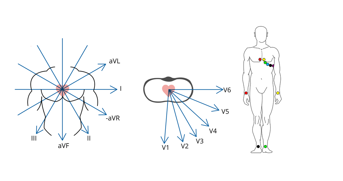 Image of spatial vectors of a 12-lead-ECG with the specified attachment points